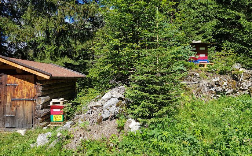 Neuer Bienenstand im Hager
